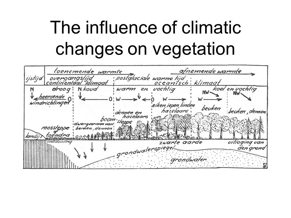 The influence of climatic changes on vegetation