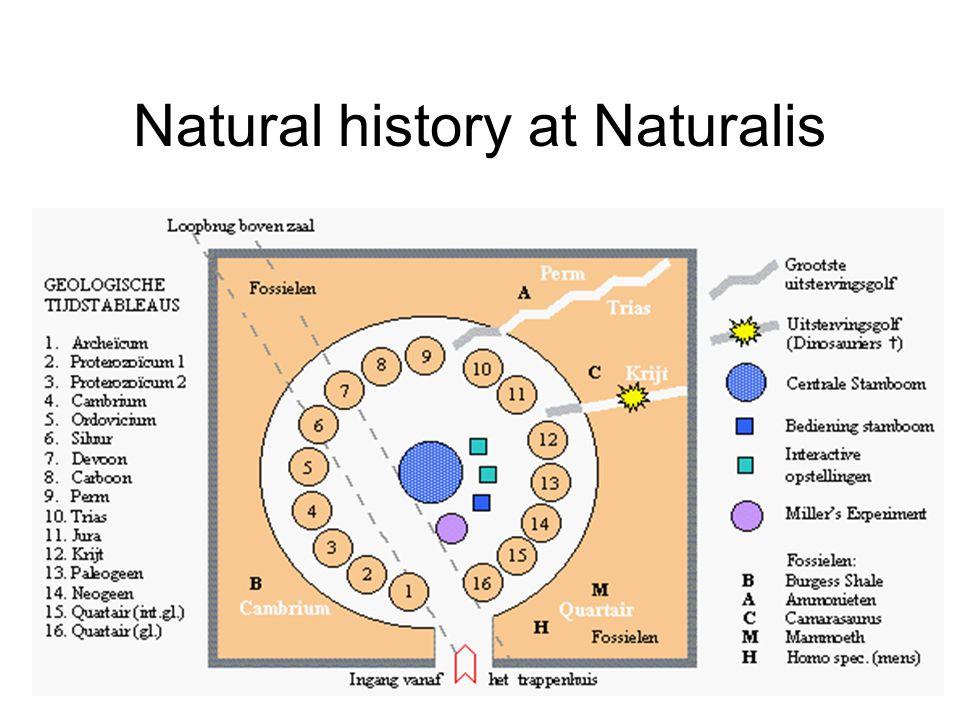 Natural history at Naturalis