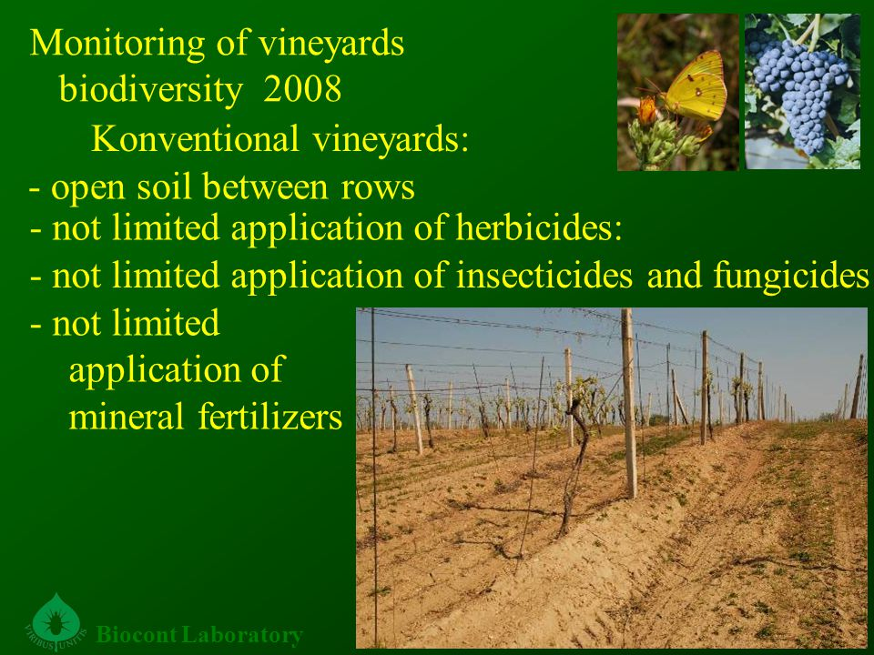 Konventional vineyards: Biocont Laboratory - open soil between rows - not limited application of herbicides: - not limited application of insecticides