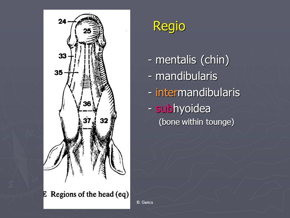 B. Gerics Regio Regio - mentalis (chin) - mandibularis - intermandibularis - subhyoidea (bone within tounge)