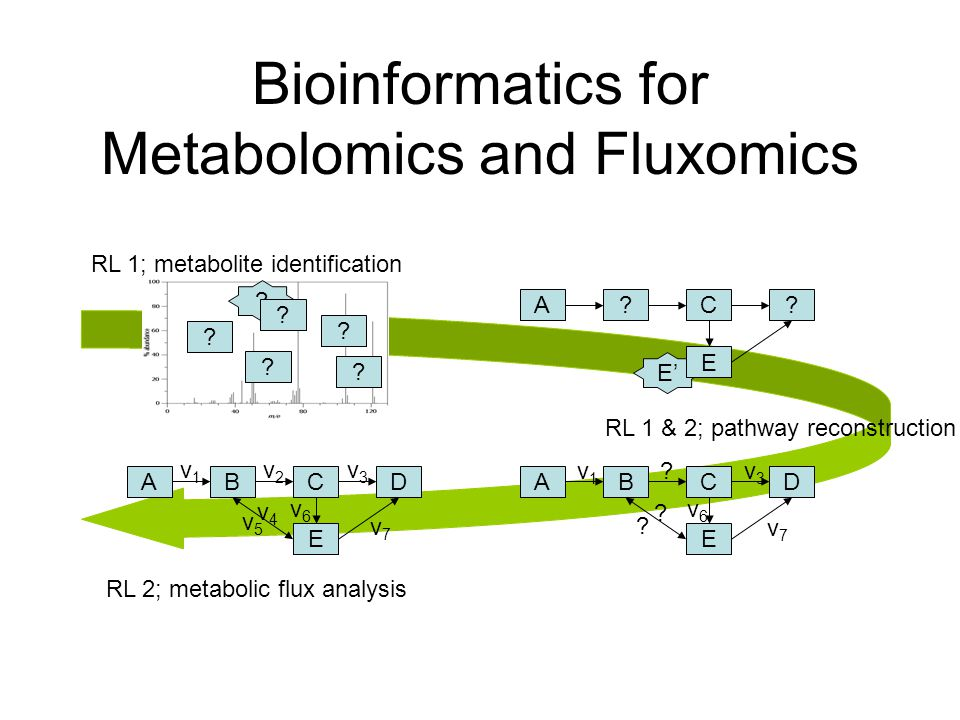 Bioinformatics for Metabolomics and Fluxomics E' .