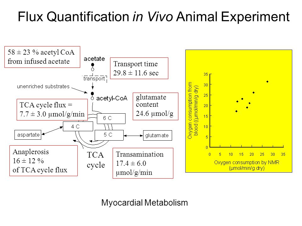 In Vivo Metabolic Rates Estimated from 13 C NMR Spectrum TCA cycle flux = 7.7 ± 3.0 µmol/g/min Anaplerosis 16 ± 12 % of TCA cycle flux glutamate content 24.6 µmol/g Transport time 29.8 ± 11.6 sec 58 ± 23 % acetyl CoA from infused acetate Transamination 17.4 ± 6.0 µmol/g/min TCA cycle Flux Quantification in Vivo Animal Experiment Myocardial Metabolism