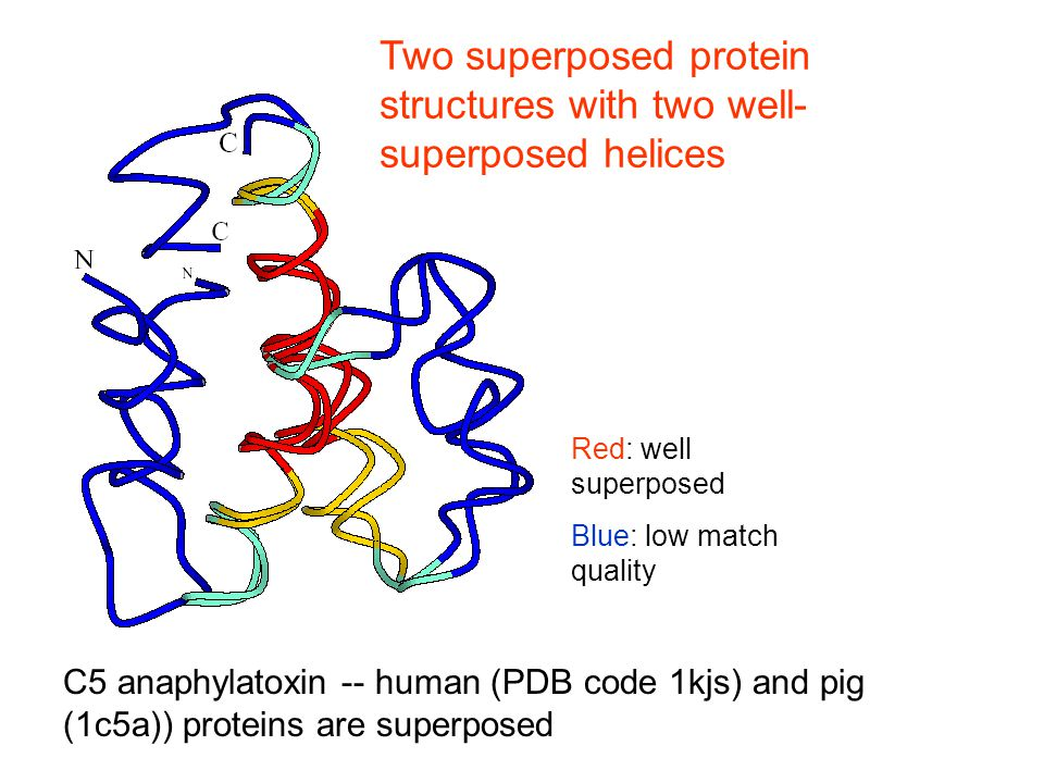 C5 anaphylatoxin -- human (PDB code 1kjs) and pig (1c5a)) proteins are superposed Two superposed protein structures with two well- superposed helices
