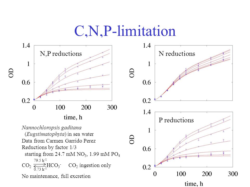 C,N,P-limitation Nannochloropsis gaditana (Eugstimatophyta) in sea water Data from Carmen Garrido Perez Reductions by factor 1/3 starting from 24.7 mM NO 3, 1.99 mM PO 4 CO 2 HCO 3 - CO 2 ingestion only No maintenance, full excretion N,P reductionsN reductions P reductions 79.5 h -1 0.73 h -1