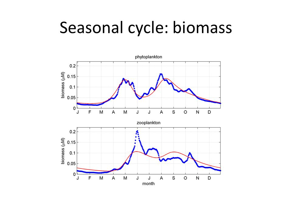 Seasonal cycle: biomass