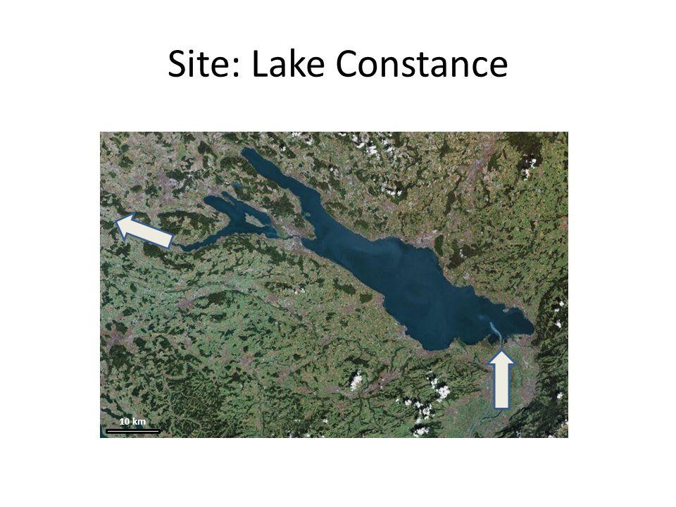 Site: the ecosystem