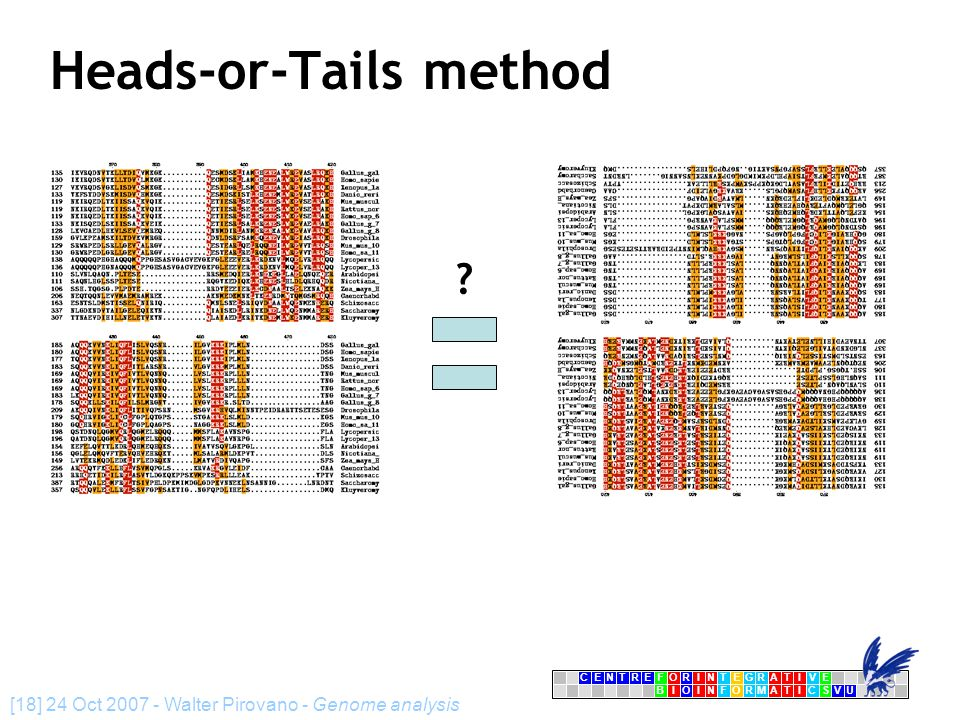 CENTRFORINTEGRATIVE BIOINFORMATICSVU E [18] 24 Oct 2007 - Walter Pirovano - Genome analysis Heads-or-Tails method