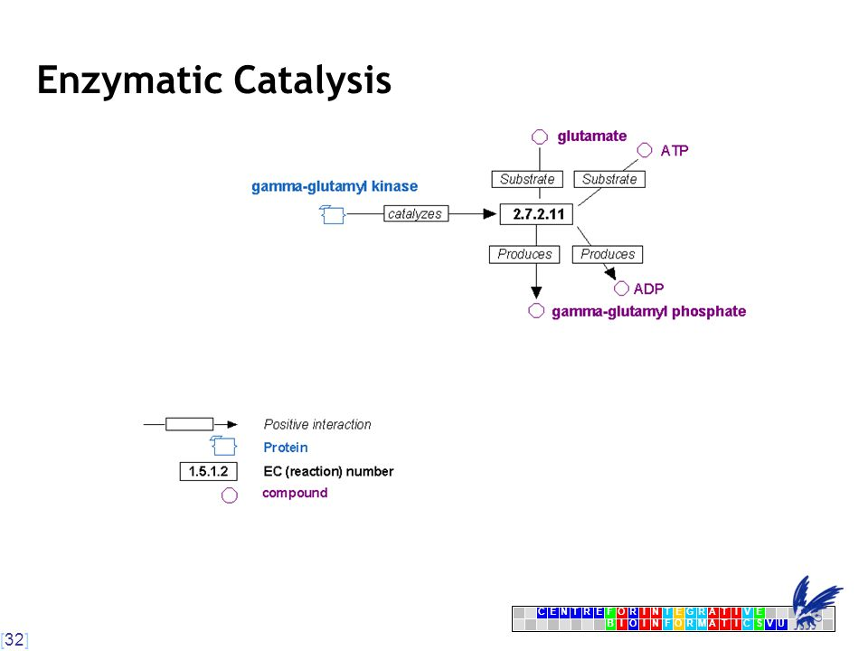 [32] CENTRFORINTEGRATIVE BIOINFORMATICSVU E Enzymatic Catalysis