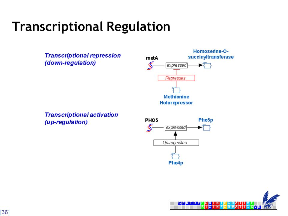 [36] CENTRFORINTEGRATIVE BIOINFORMATICSVU E Transcriptional Regulation