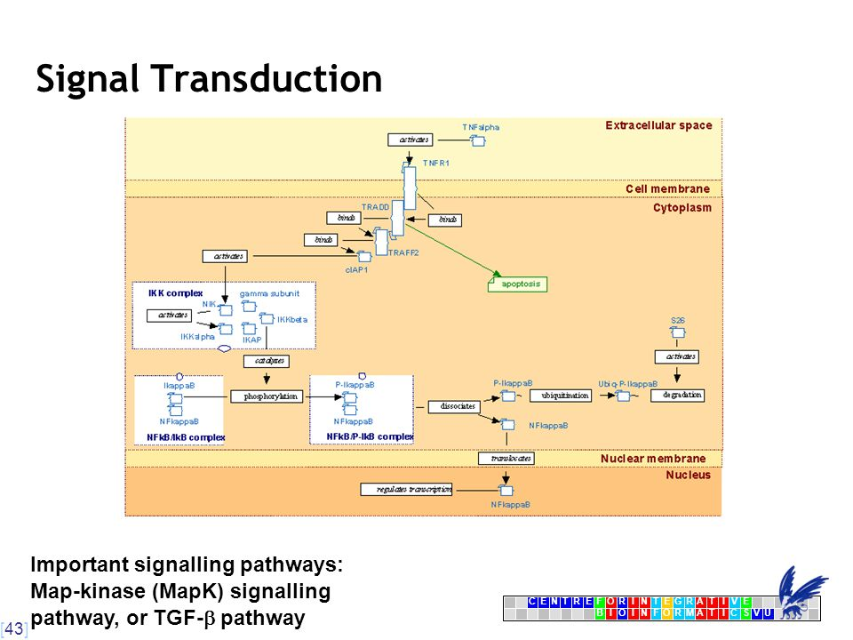 [43] CENTRFORINTEGRATIVE BIOINFORMATICSVU E Signal Transduction Important signalling pathways: Map-kinase (MapK) signalling pathway, or TGF-  pathway