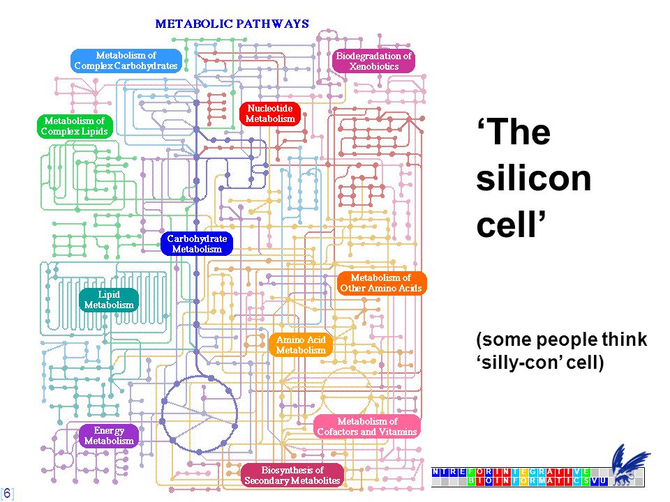 [6] [6][6] CENTRFORINTEGRATIVE BIOINFORMATICSVU E 'The silicon cell' (some people think 'silly-con' cell)