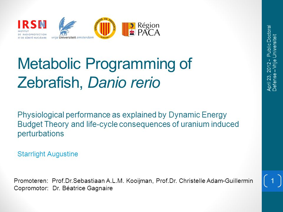 Results: effects of uranium 12 Dry mass (µg) Age, d Data: Stéphanie Bourrachot 2009 Lines: DEB model predictions 1054 nM 0 nM April 23, 2012 - Public Doctoral Defense – Vrije Universiteit Feeding Digestion Storage Growth Development Processes specified by the DEB model Reproduction Ageing Maintenance