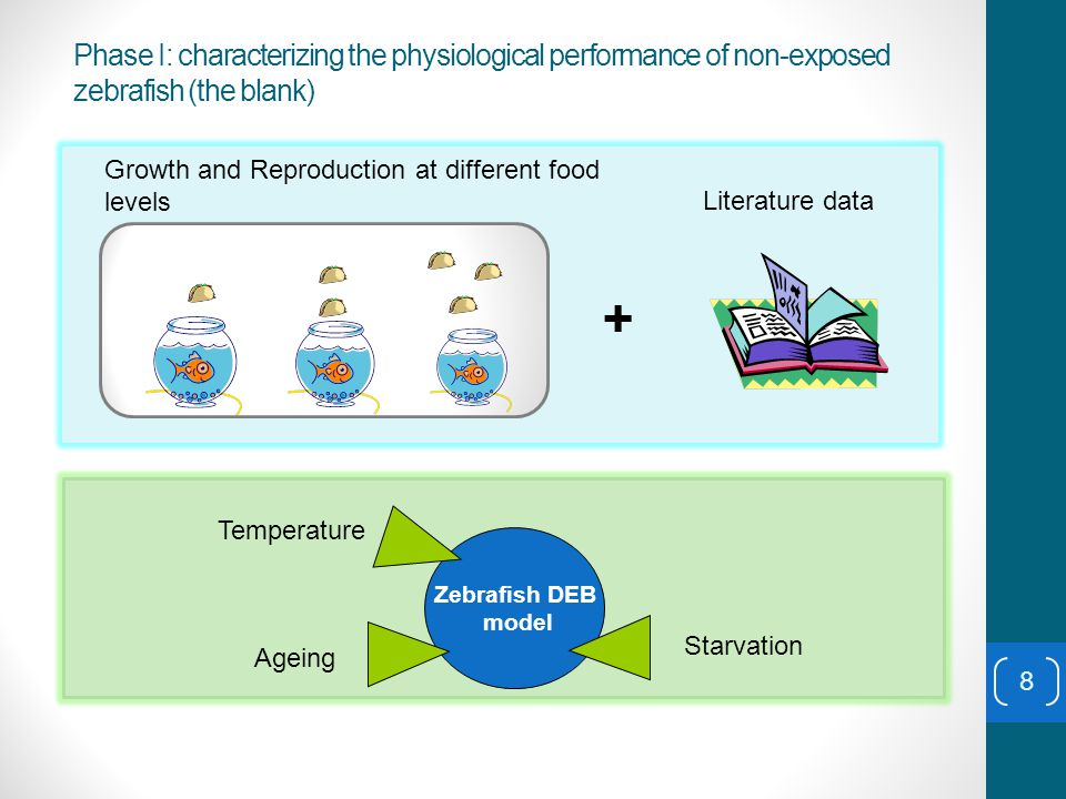 Phase I: characterizing the physiological performance of non-exposed zebrafish (the blank) Growth and Reproduction at different food levels + Literature data Zebrafish DEB model Ageing Temperature Starvation 8
