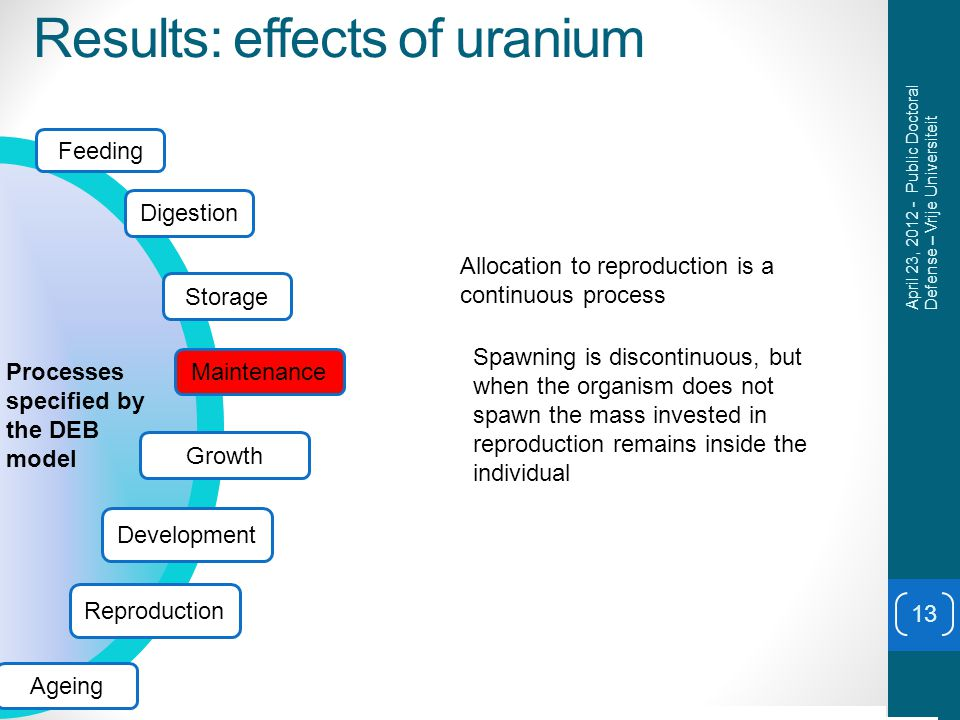 Results: effects of uranium 13 April 23, 2012 - Public Doctoral Defense – Vrije Universiteit 010203040 0 500 1000 1500 2000 0.2 0.4 0.6 0.8 1 1.2 Allocation to reproduction is a continuous process Spawning is discontinuous, but when the organism does not spawn the mass invested in reproduction remains inside the individual Feeding Digestion Storage Growth Development Processes specified by the DEB model Reproduction Ageing Maintenance