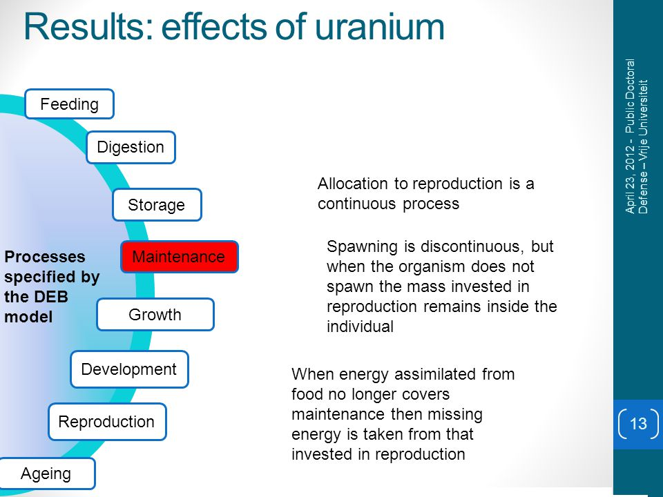 Results: effects of uranium 13 April 23, 2012 - Public Doctoral Defense – Vrije Universiteit 010203040 0 500 1000 1500 2000 0.2 0.4 0.6 0.8 1 1.2 Allocation to reproduction is a continuous process Spawning is discontinuous, but when the organism does not spawn the mass invested in reproduction remains inside the individual When energy assimilated from food no longer covers maintenance then missing energy is taken from that invested in reproduction Feeding Digestion Storage Growth Development Processes specified by the DEB model Reproduction Ageing Maintenance