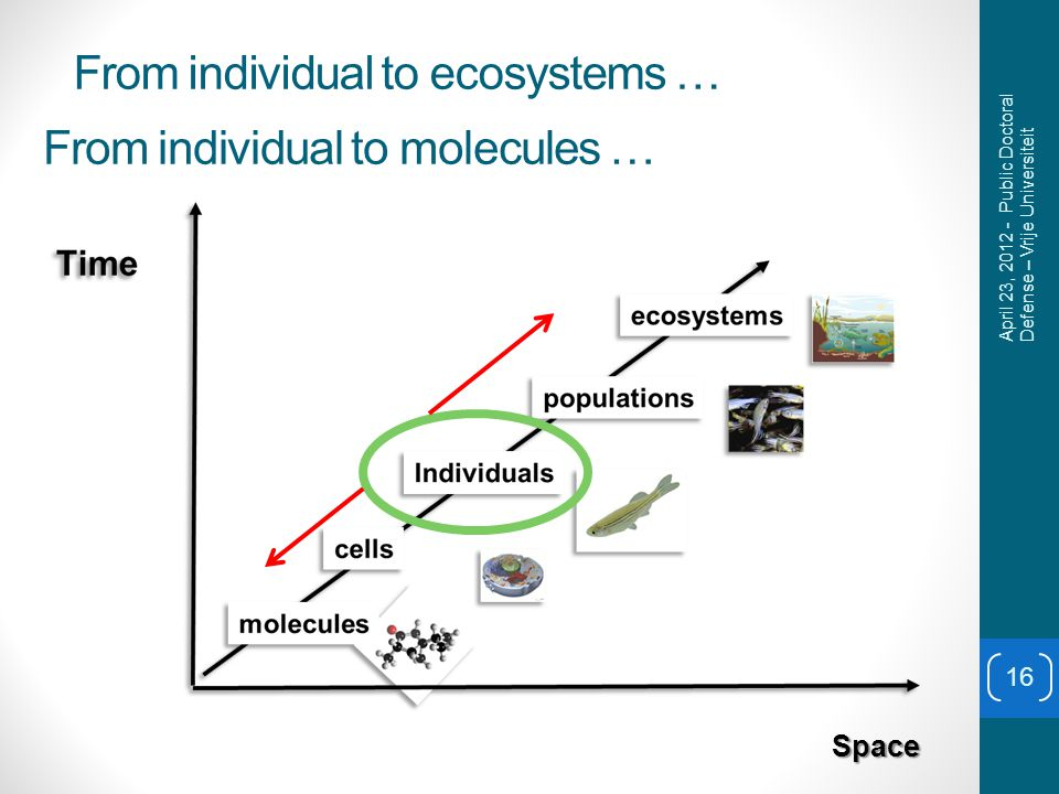 From individual to ecosystems … 16 Space April 23, 2012 - Public Doctoral Defense – Vrije Universiteit From individual to molecules …