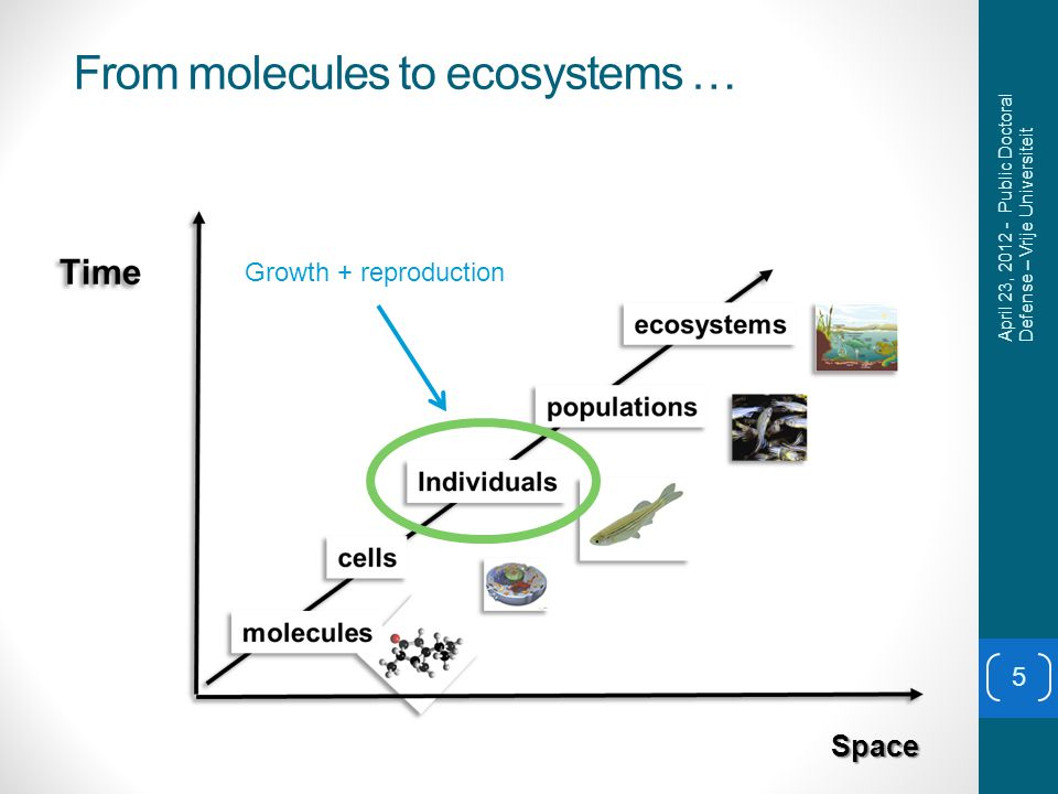 From molecules to ecosystems … 5 Space Growth + reproduction April 23, 2012 - Public Doctoral Defense – Vrije Universiteit
