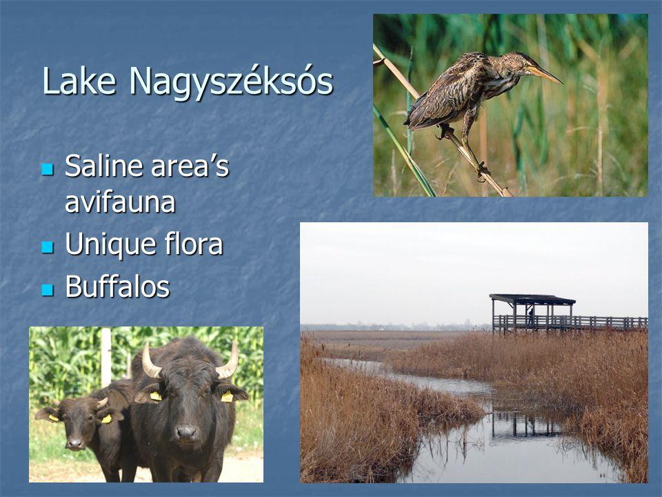 Lake Nagyszéksós Saline area's avifauna Saline area's avifauna Unique flora Unique flora Buffalos Buffalos