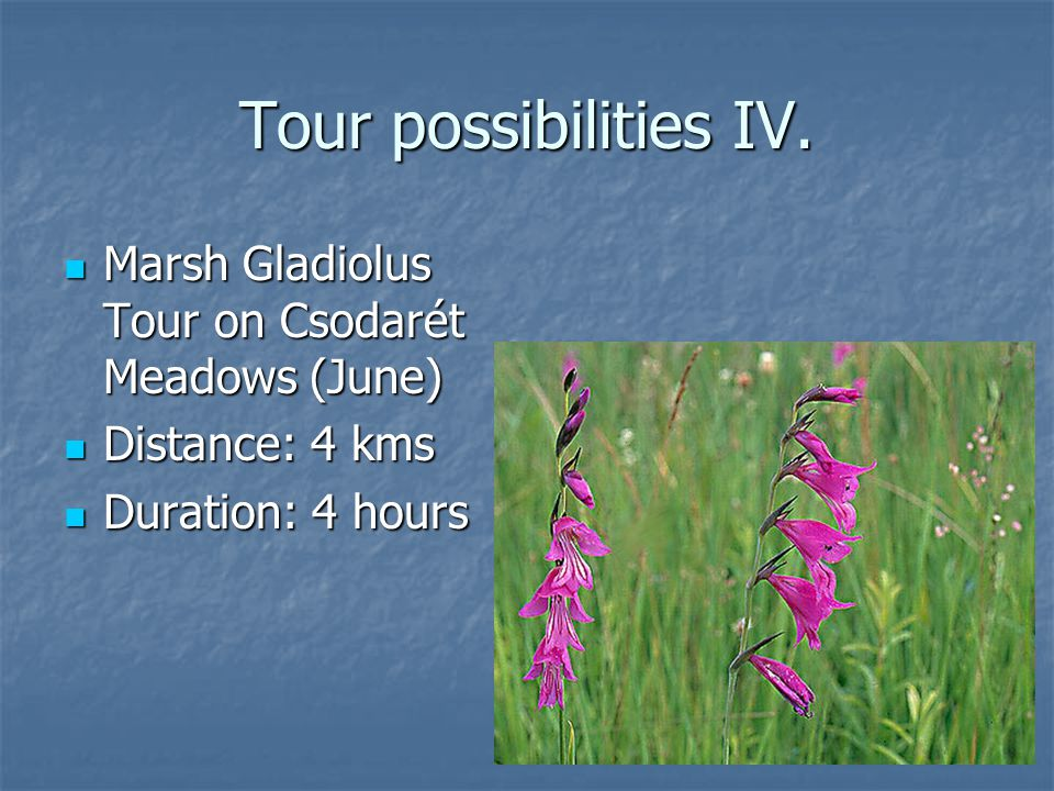 Tour possibilities IV.