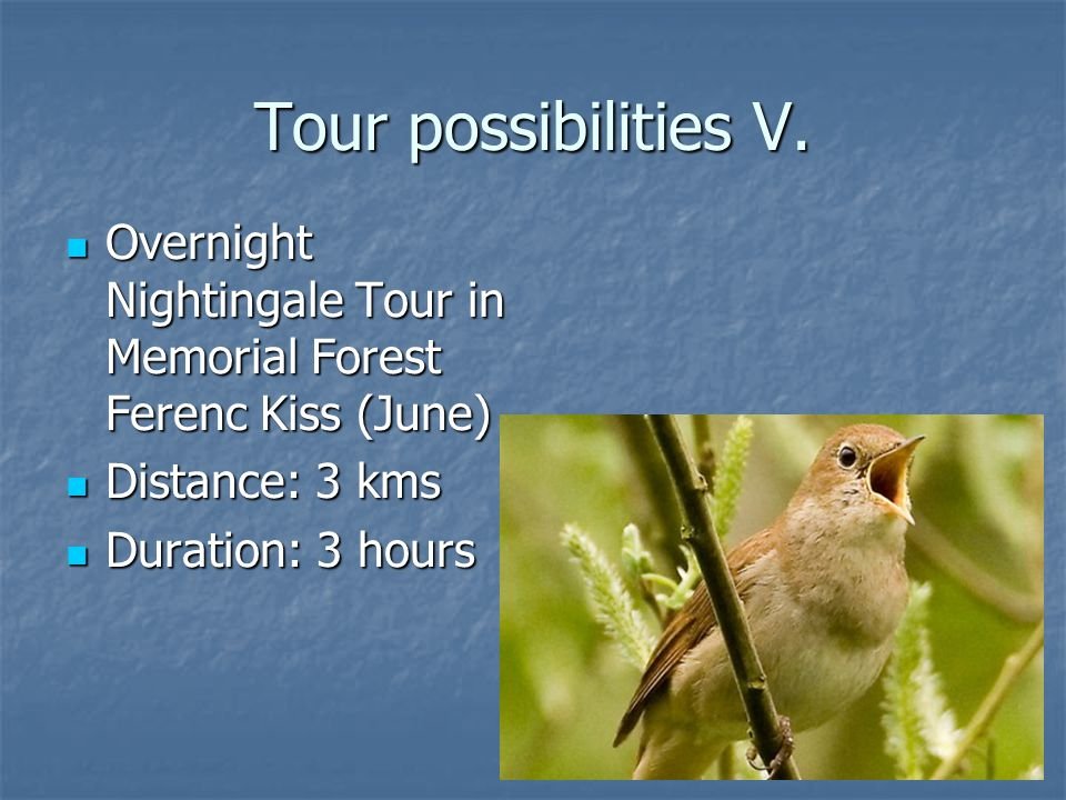 Tour possibilities V.