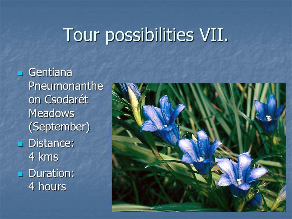 Tour possibilities VII. Gentiana Pneumonanthe on Csodarét Meadows (September) Gentiana Pneumonanthe on Csodarét Meadows (September) Distance: 4 kms Di