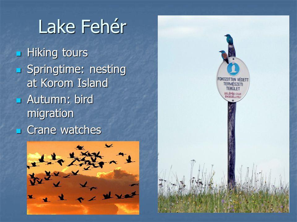 Lake Fehér Hiking tours Hiking tours Springtime: nesting at Korom Island Springtime: nesting at Korom Island Autumn: bird migration Autumn: bird migra