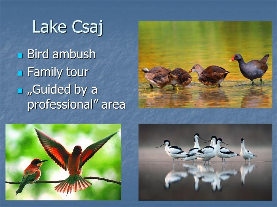 "Lake Csaj Bird ambush Bird ambush Family tour Family tour ""Guided by a professional"" area ""Guided by a professional"" area"