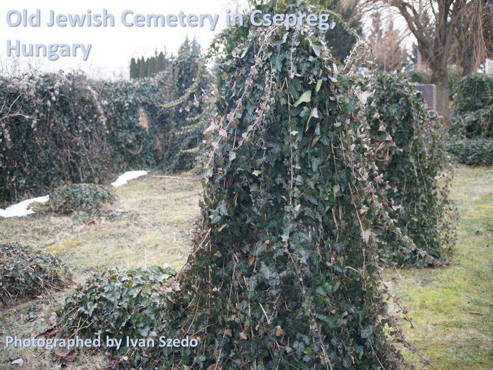Old Jewish Cemetery in Csepreg, Hungary Photographed by Ivan Szedo