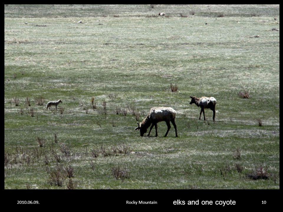 2010.06.09.Rocky Mountain9 elks…