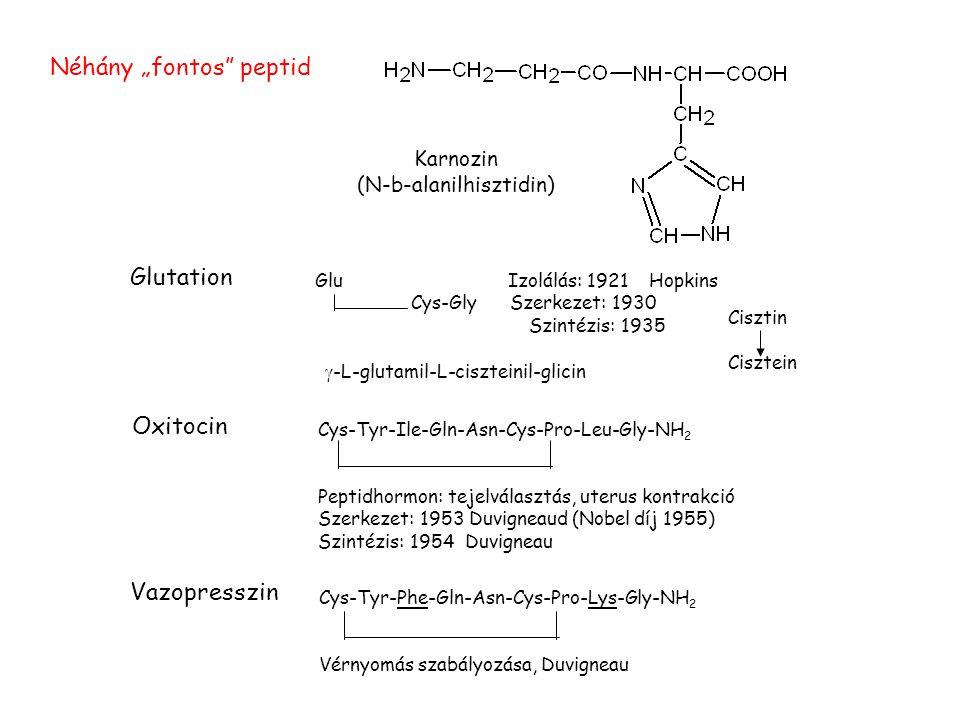 """Oxitocin Cys-Tyr-Ile-Gln-Asn-Cys-Pro-Leu-Gly-NH 2 Peptidhormon: tejelválasztás, uterus kontrakció Szerkezet: 1953 Duvigneaud (Nobel díj 1955) Szintézis: 1954 Duvigneau Vazopresszin Cys-Tyr-Phe-Gln-Asn-Cys-Pro-Lys-Gly-NH 2 Vérnyomás szabályozása, Duvigneau Glutation Glu Izolálás: 1921 Hopkins Cys-Gly Szerkezet: 1930 Szintézis: 1935 Cisztin Cisztein  -L-glutamil-L-ciszteinil-glicin Karnozin (N-b-alanilhisztidin) Néhány """"fontos peptid"""