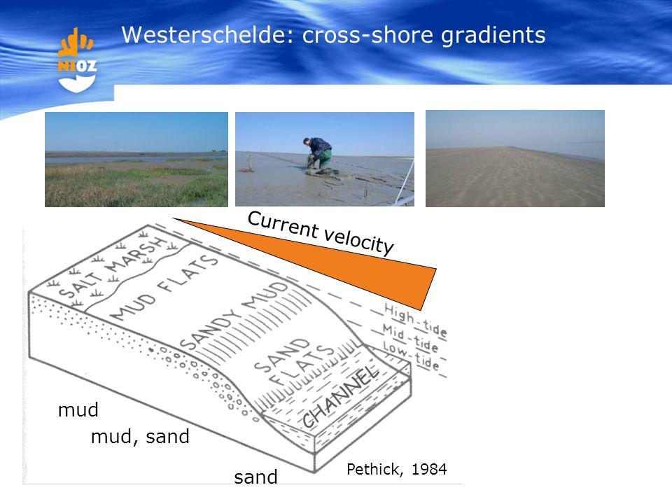 Current velocity Pethick, 1984 mud mud, sand sand CHANNEL Westerschelde: cross-shore gradients