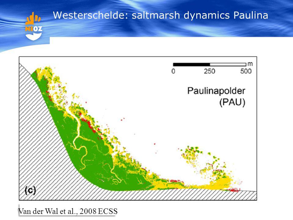 Westerschelde: saltmarsh dynamics Paulina Van der Wal et al., 2008 ECSS