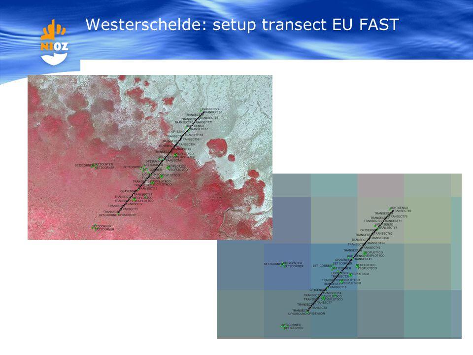 Westerschelde: setup transect EU FAST