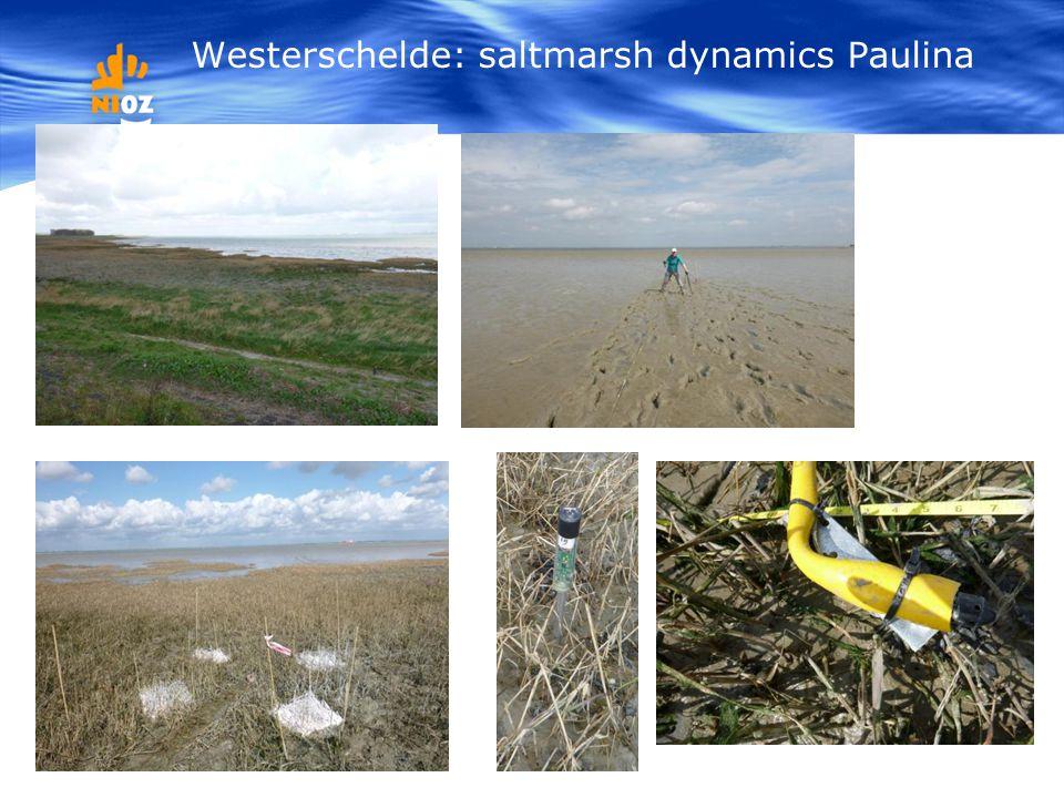 Westerschelde: saltmarsh dynamics Paulina
