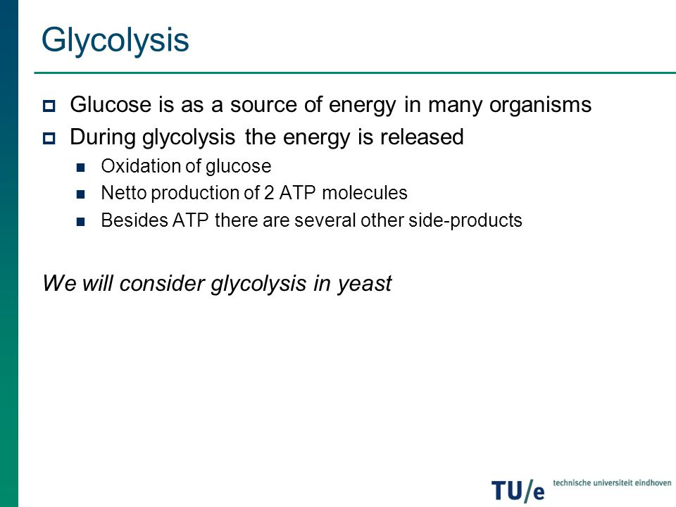Glycolysis in Yeast