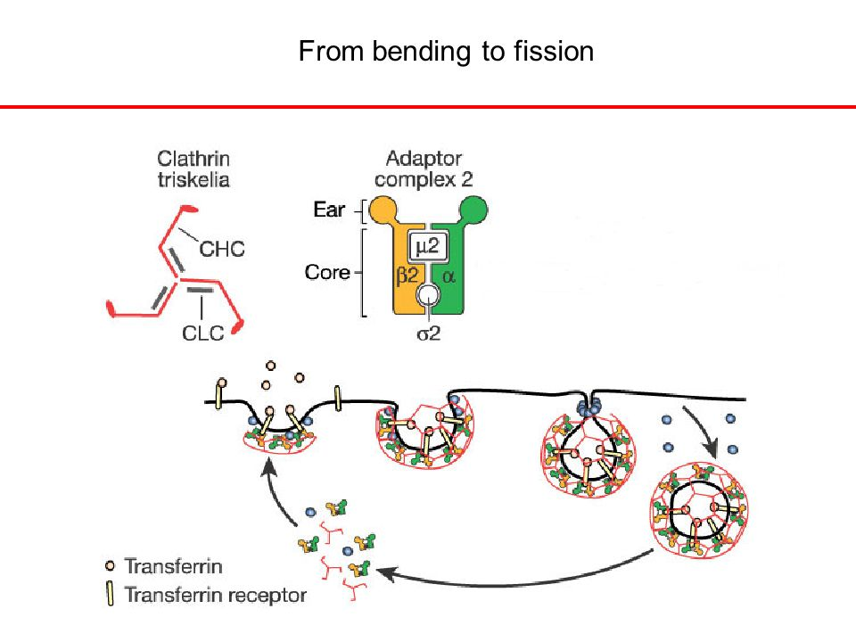 From bending to fission