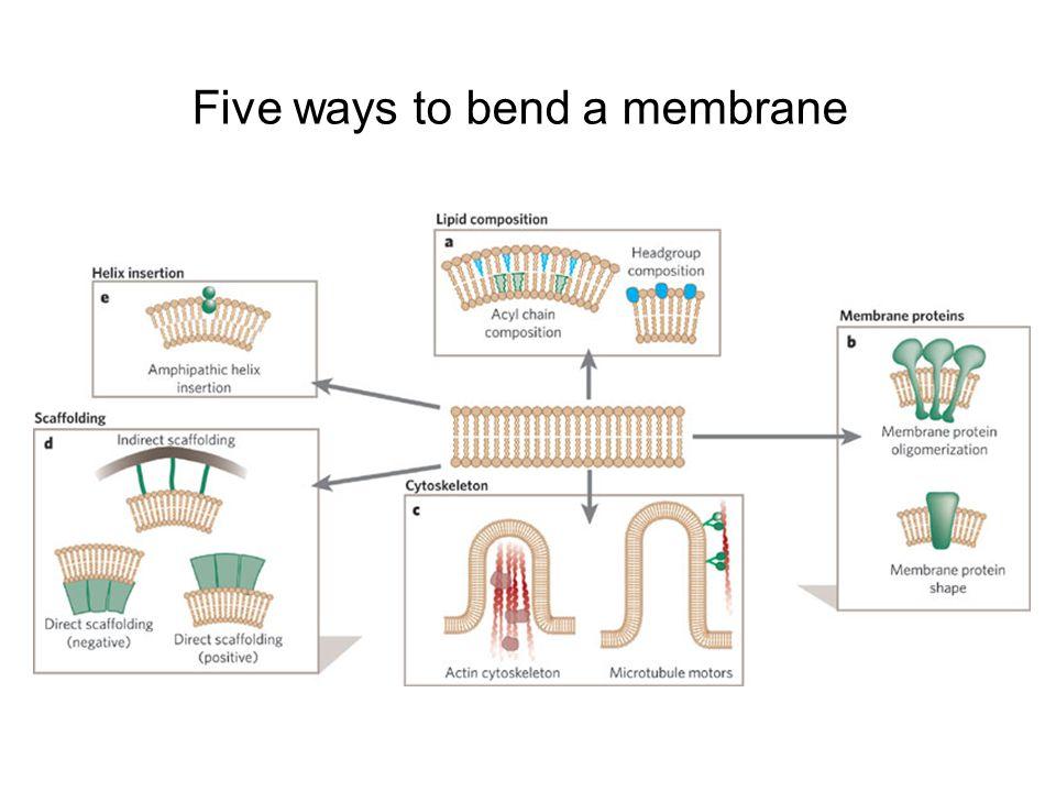 Five ways to bend a membrane