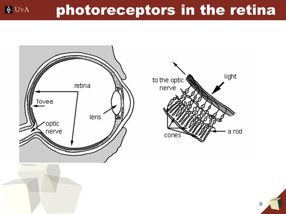 9 photoreceptors in the retina