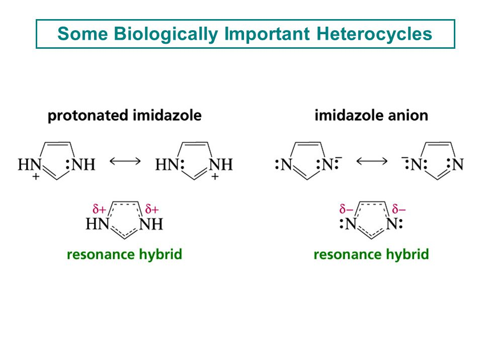 Some Biologically Important Heterocycles