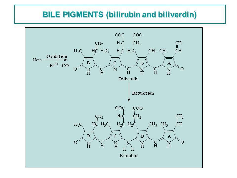 BILE PIGMENTS (bilirubin and biliverdin) Bilirubin H Hem Biliverdin NNN N C CCO O H 3 CC CH 2 H 3 CCH 2 C CH 2 COO - C C CH 3 CCH CH 2 HH H - OO H 2 H