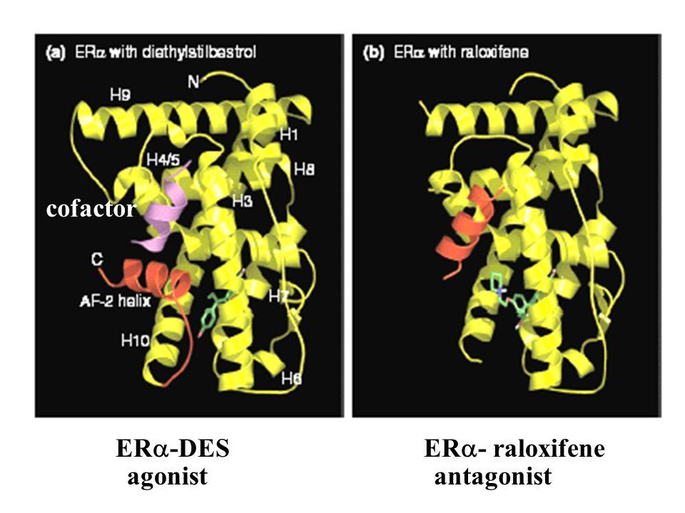 ER  -DESER  - raloxifene agonistantagonist cofactor