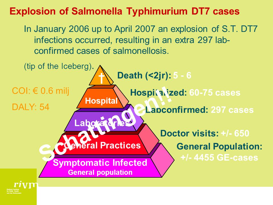 National Institute for Public Health and the Environment Explosion of Salmonella Typhimurium DT7 cases In January 2006 up to April 2007 an explosion of S.T.