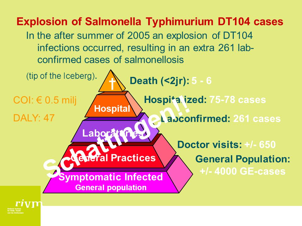 National Institute for Public Health and the Environment Explosion of Salmonella Typhimurium DT104 cases In the after summer of 2005 an explosion of DT104 infections occurred, resulting in an extra 261 lab- confirmed cases of salmonellosis (tip of the Iceberg).