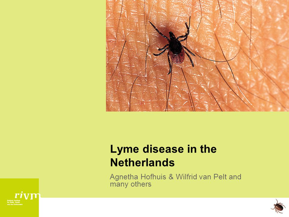 National Institute for Public Health and the Environment Lyme disease in the Netherlands Agnetha Hofhuis & Wilfrid van Pelt and many others