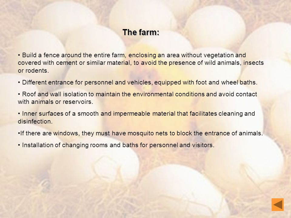 The farm: Build a fence around the entire farm, enclosing an area without vegetation and covered with cement or similar material, to avoid the presence of wild animals, insects or rodents.
