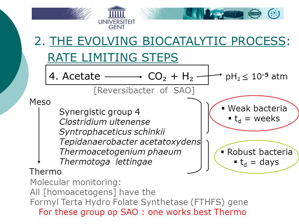 2. THE EVOLVING BIOCATALYTIC PROCESS: RATE LIMITING STEPS 4. Acetate CO ₂ + H ₂  Weak bacteria  t d = weeks  Robust bacteria  t d = days Meso Syne