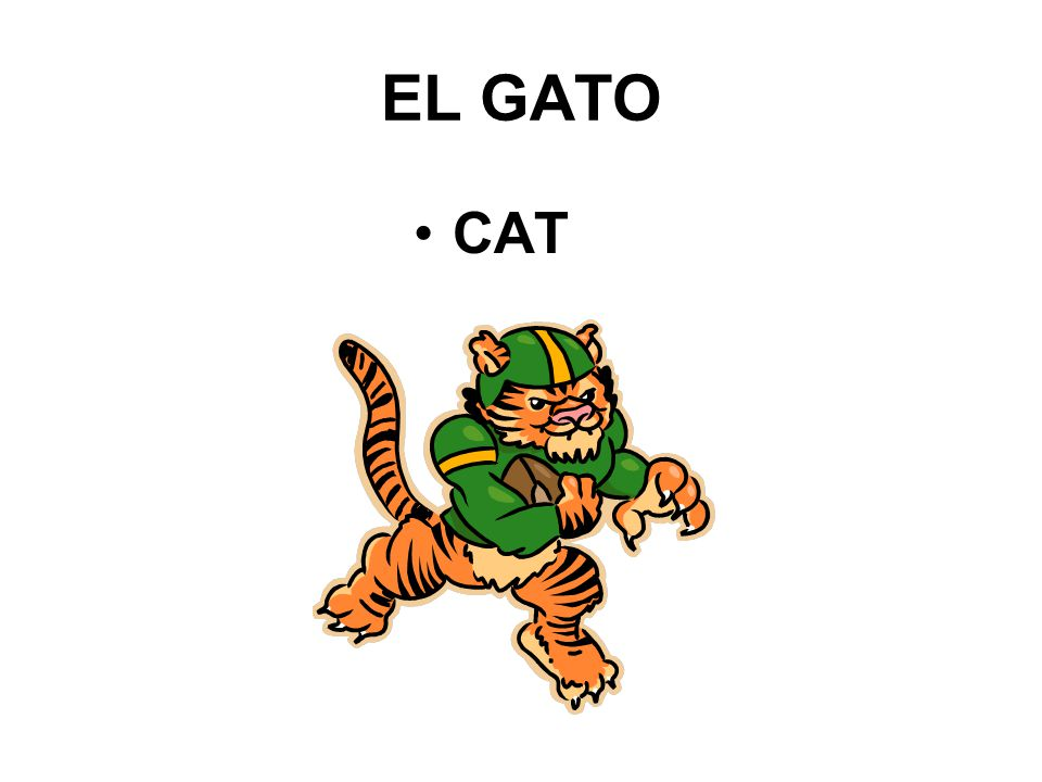 EL GATO CAT