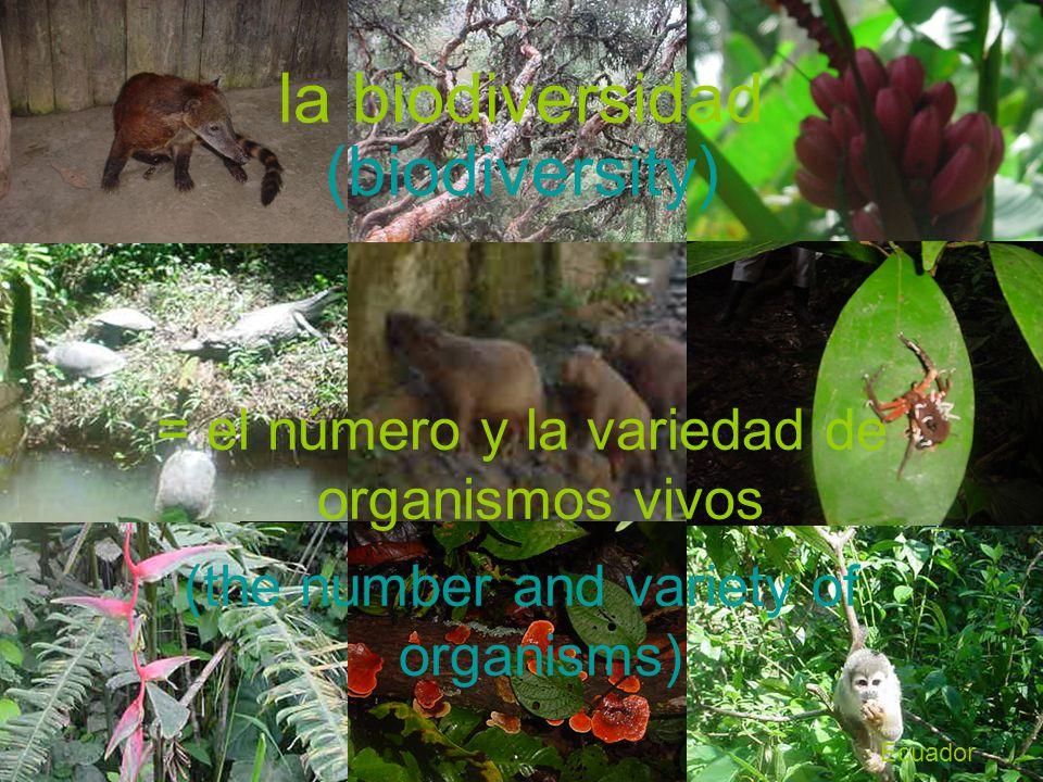 la biodiversidad = el número y la variedad de organismos vivos (biodiversity) Ecuador (the number and variety of organisms)