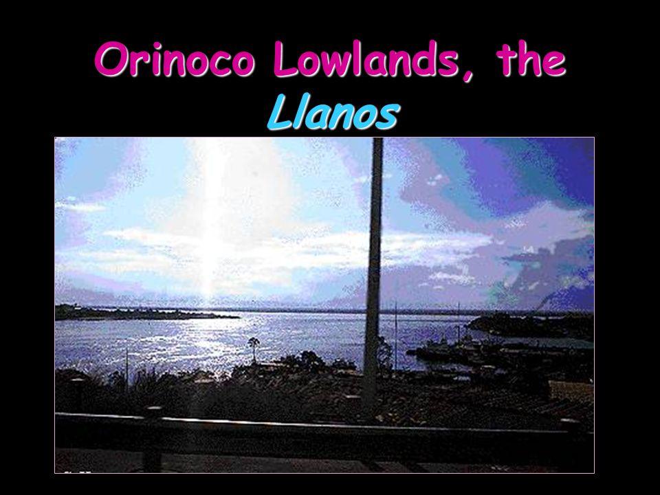 Orinoco Lowlands, the Llanos