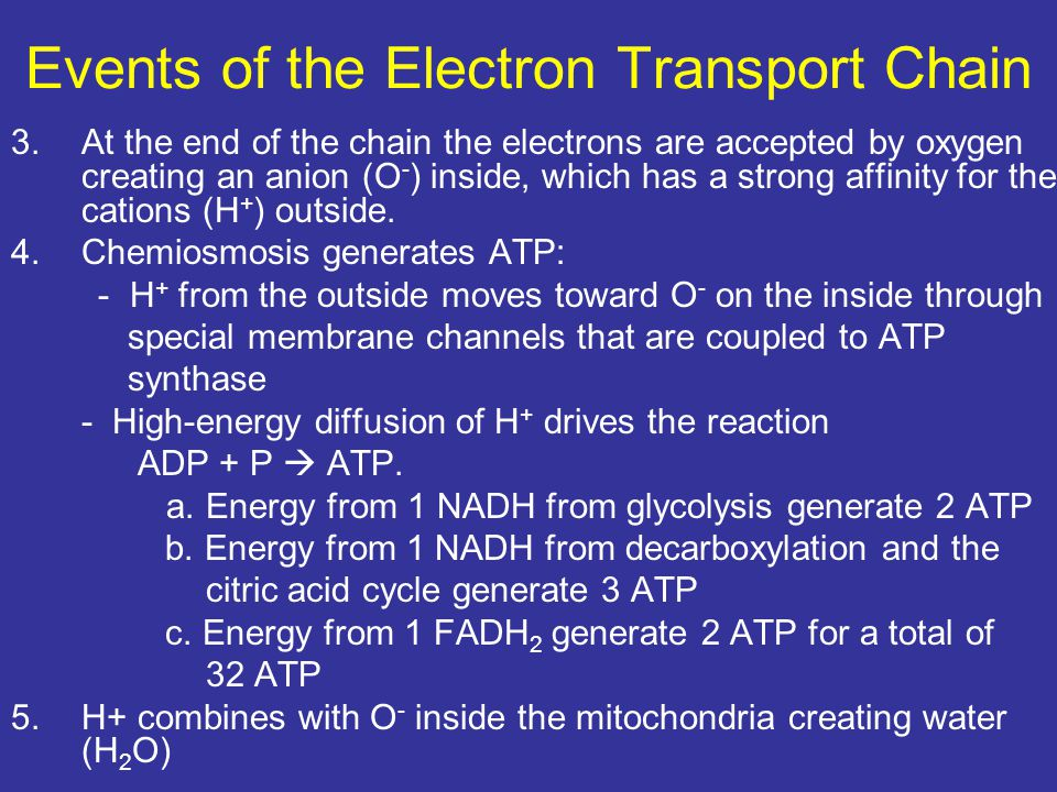 Events of the Electron Transport Chain 3.At the end of the chain the electrons are accepted by oxygen creating an anion (O - ) inside, which has a str